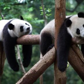 Beste 10 tips om te ontspannen - tip 1 - doe niks - Panda - flowsessions.com